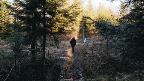 Lubię do lasu…
